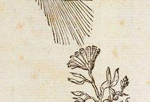 Medieval drawings