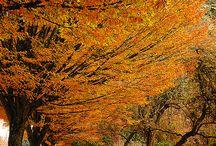 가을풍경 이미지 모음 / 멋진 가을 풍경은 언제나 좋아요~~