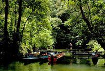 Maleisië op Original Asia / Voor de mooiste reizen naar het veelzijdige Maleisië & Borneo kijkt u snel op onze website!