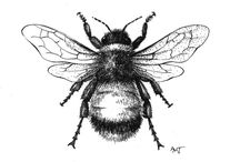Bees, birds, flowers