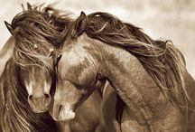 Roberto Dutesco horse