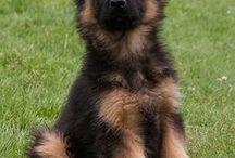 Hund<3