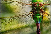 Dragonflies...my fav!