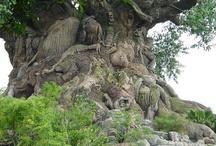 The One-leggeds, Tree People