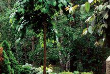 Pienen puutarhan puut