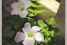 • Flowers • Leaves • Little Pretty Things • / Daybreak Days iPhone Photography