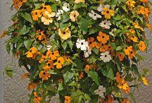 Garden / Gardening tips, plants, veggies, herbs etc