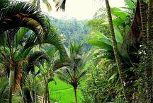 Landschap Bali