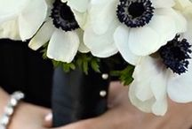 FL : Anemone : Expectation, care and honesty.