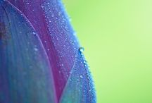 Colour  / Natural colour