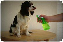 répulsif chien puce tique
