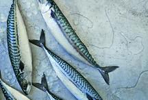 mackerel/Makreel/Makrell