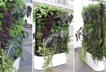 Interior plants design