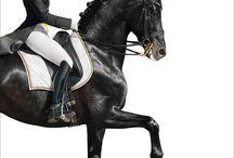 Hevospiirrustukset