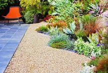 New Landscape / Desert / Drought Gardening