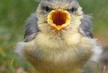 Animals-Birds #2 / Photos of birds. / by Ellary Branden