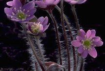 doğa çiçek