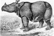Rhinoceros illustrations
