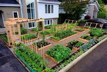 Λαχανόκηποι