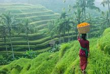 Bali 2015 Reunion