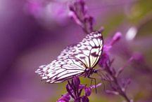 In the Garden - Butterflies & Moths / by Purple Moon Designs Hair Jewelry