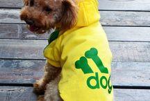 dog online store