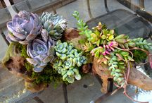 Succulents/airplants / by Cathy Stephens