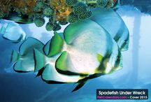 Tropical Fish 2015 Wall Calendar / Angelfish, Anthias, Gobys, Shrimp, Nudibranchs and other dazzling tropical fish fill the pages of Ocean Treasures 2015 wall calendar. This 2015 calendar is a colorful collection of 14 underwater photographs taken from dive sites in Indonesia (Bali & Sulawesi), Philippines (Anilao, Batangas), and Palau (Koror).