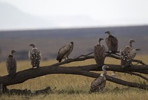 PTA Serengeti, Tanzania