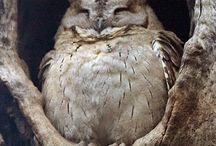 Critters - Errol & Hedwig