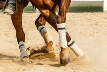 Reining / by Nati Boots