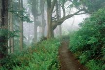 Terrific Trails
