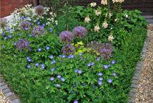 OUTER SPACE GARDEN DESIGN 6 / Front garden throughout the seasons