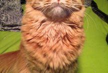 My daughter's cat Rory! nickname Puff