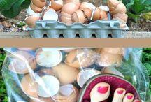 Easy Organic Gardening / Organic Gardening Tips That are Easy to Do