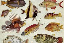 animales mar