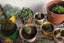 Oou Cactus* / Cactus y Suculentas...