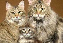 Cat Families