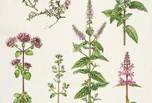 kreslené rostliny