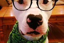 #Pittie2020 / A 5-year social media picture campaign to change the way the world views pit bulls one lens at a time.