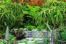 Tropical Garden / Garden