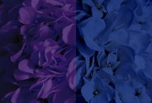Purple + Blue Weddings / Purple and blue wedding ideas! From floral and reception, to bridesmaid dresses and wedding invitations!