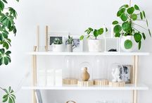 shelves / bookshelves