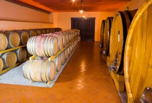CANTINA MASSUCCO / La cantina dell'Azienda Massucco sorge a Castagnito, nel Roero, dove su colline morbite e tondeggianti, ricche di tradizioni vinicole, nascono eccellenti vini bianchi e rossi. Com'è nelle migliori e nelle piu solide tradizioni familiari, il patrimonio di conoscenze e di amore per la propria terra si è perpetrato attraverso le generazioni, traendo dalle moderne tecnologie un nuovo straordinario impulso.