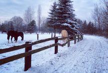Winter photos by Anna / Winter