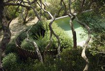 Garden / by Titia Huggard
