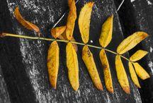 Autumn 2013 / Autumn pictures