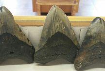 Rocks, fossils and minerals