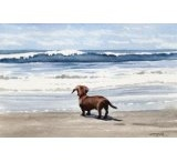 Dachshunds / I have four miniature Dachshunds and they are the best dogs in the world! / by Debi Stanton