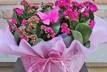 Plantas Naturales / Plantas naturales de nuestra tienda online www.floristeriafernando.com